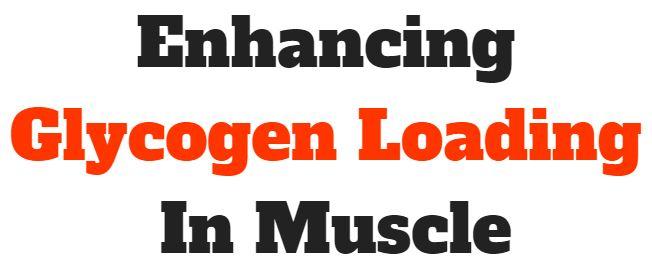 creatine enhances glycogen loading in muscle